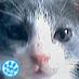 Shimatora Social Profile