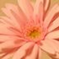 みっひー | Social Profile