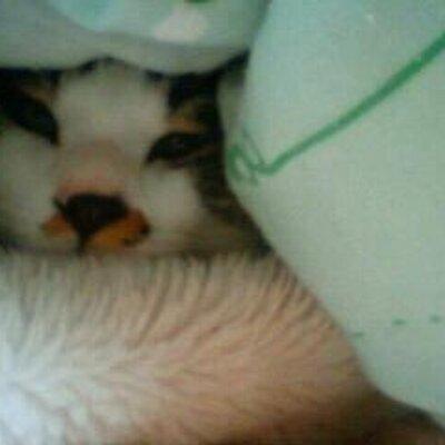 ネコの森   Social Profile