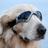 The profile image of pentel_yoi