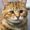 小猫遊りょう(たかにゃし・りょう)