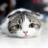 The profile image of 7eSFTP30jwirl2O