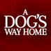 A Dog's Way Home's Twitter Profile Picture