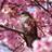 The profile image of popporu23