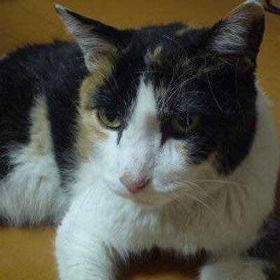 かえこりん | Social Profile