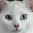 mmean_cat