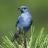 _suitebird profile