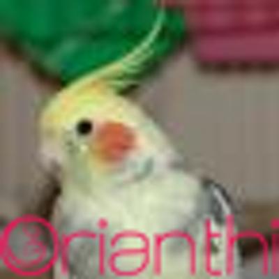 Skybirdmax | Social Profile