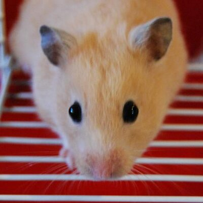 Curious Lil Hamster | Social Profile