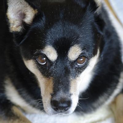 黒犬 | Social Profile