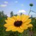 @natural_farm