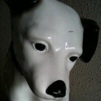犬麻呂 | Social Profile