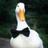 _Duck_Tweeting