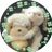 The profile image of sarasa_sapphire