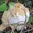 The profile image of RiOh60078725