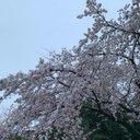 ちき【札幌C49】【月曜西き28b】