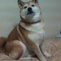 hanasaka_jiisan | Social Profile