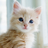 The profile image of kawawa_doubutu