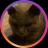 The profile image of plus_wisteria_