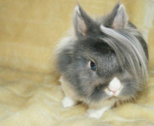 Emo Bunny Social Profile
