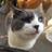 The profile image of jo_makoto