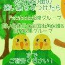 【鳥の保護情報】飼い鳥迷子の全国街角保護&目撃情報収集グループ