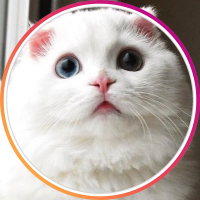 CatsBible