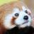 The profile image of meimei_konkatsu