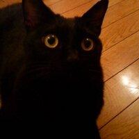 Signor Okamuro | Social Profile