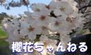 櫻花ちゃんねる Social Profile
