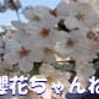 櫻花ちゃんねる | Social Profile