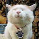 猫専門♡癒しのもふもふ動画!