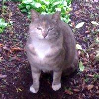 yuko_saito | Social Profile
