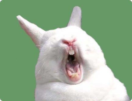 Rabbit Social Profile