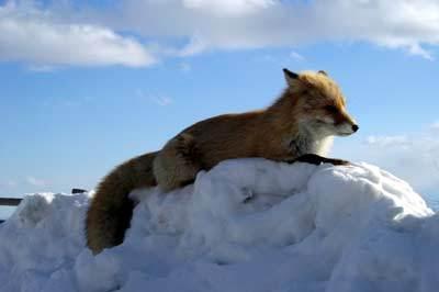 北の小狐's Twitter Profile Picture
