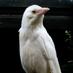 Beyaz Karga's Twitter Profile Picture