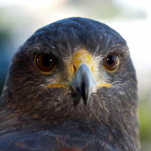 鳥びあ Social Profile