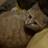 The profile image of neko_tsune
