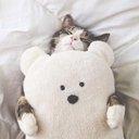 夢猫 シロ