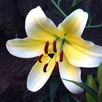 garden designer :-) | Social Profile