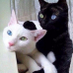 Cat Black's Twitter Profile Picture