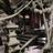 Tokyogreen