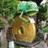 The profile image of nanaken_211