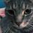 The profile image of HephNeedsAHome