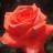 The profile image of V0bnpVPKuovSMXS