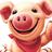 Schweinchen normal