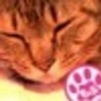 猫姫日記 | Social Profile