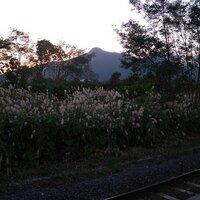 kurumayuri | Social Profile