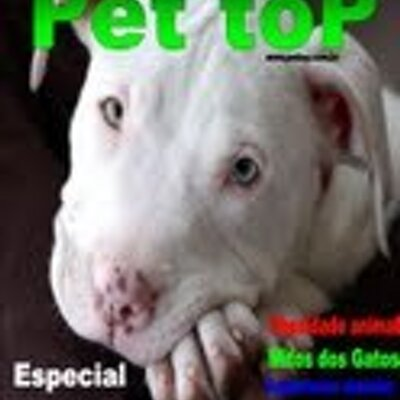 Pet Top