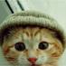 Orbital_Cat